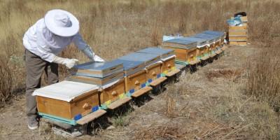 Büyükşehir'den Başkentli Çiftçilere Arıcılık Eğitimi